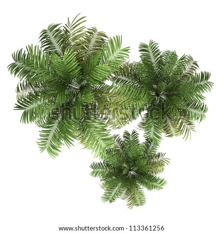 top view of three areca palm trees isolated on white background #113361256