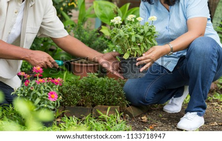 Happy gardeners planting flowers together at backyard or Flower garden to grow naturally. small business or lifestyle peace relax concept. Asian Senior couple gardening in the backyard garden. #1133718947