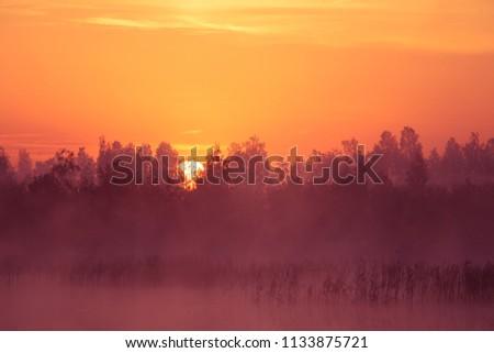 A beautiful, pink sunrise ower the swamp. Sun rising in wetlands, purple misty atmosphere. Latvia, Northertn Europe #1133875721