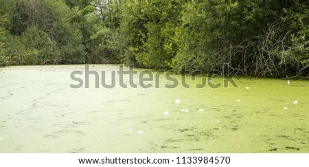 Pond surface covered with floating duck weed #1133984570