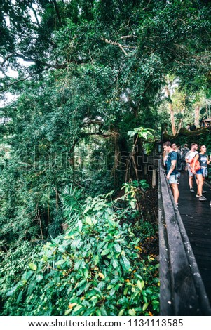 UBUD, BALI, INDONESIA - SEPTEMBER 4, 2017 : Tourists walking in Ubud Monkey forest. Bali, Indonesia. Artistic filter applied. #1134113585