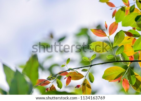 Autumn colorful leaves,shallow dept of field.idea use as background