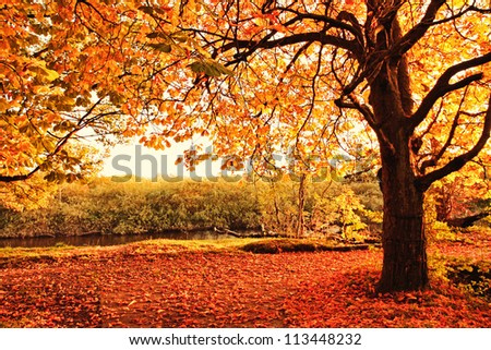 Beautiful afternoon in the autumnal park #113448232