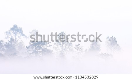 misty morning in the woods. silhouette of trees grove in thick white morning fog. pale color wood obscure by moisture in the mountains forest air.