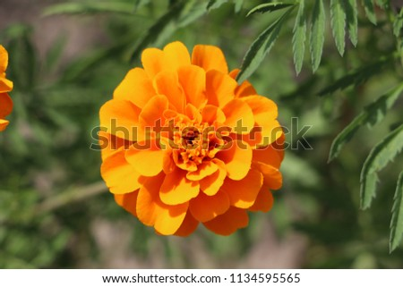 nature and flower #1134595565