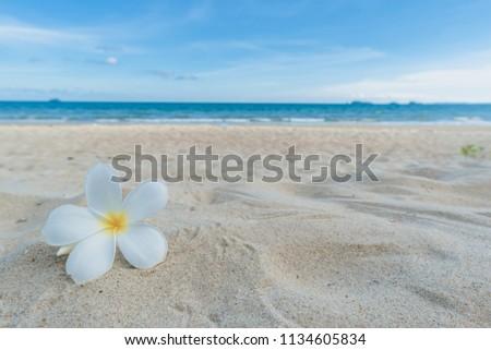 Beautiful nature sea summer background