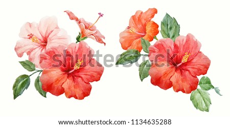Watercolor set of illustrations, pink and red hibiscus flowers, tropical invitation, green leaves, invitation flower card #1134635288