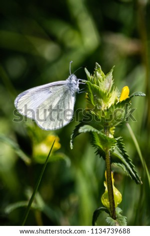 The small butterfly clings to a plant #1134739688