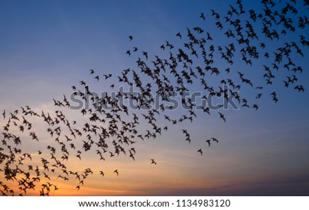 Row of flying bats colony with sunset sky background Royalty-Free Stock Photo #1134983120