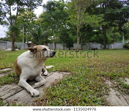 brown dog siting on the yard #1135024976