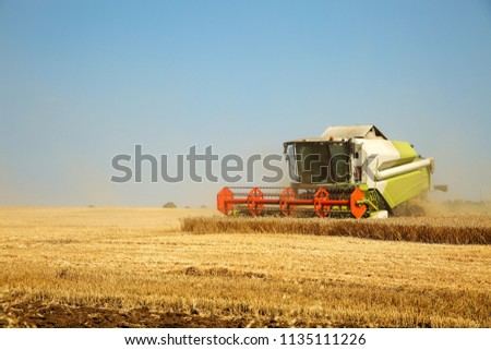 Combine harvester working on a golden ripe wheat field on a bright summer day against blue sky. Grain dust in the air. Agricultural concept, space for text  #1135111226