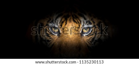 Tiger face on black background Royalty-Free Stock Photo #1135230113