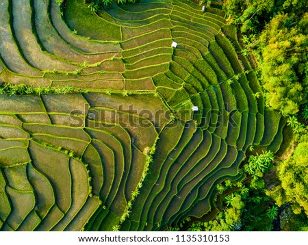 Aerial View of Rice Field Terrace, Bandung, West Java Indonesia, Asia