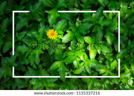 Yellow flower with green Leaves and make white border. #1135337216