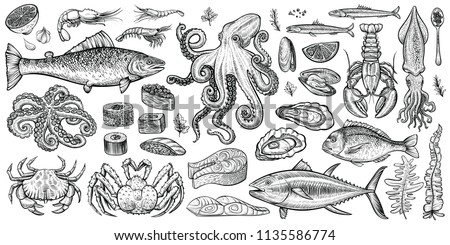 Seafood vector illustrations. Hand drawn line sea fishes, sushi rolls, oysters, mussels, lobster, squid, octopus, crabs, prawns, fish fillet, laminaria and wakame seaweeds. Healthy food natural set. #1135586774