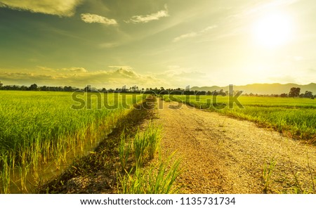 Beautiful green young rice field, local soil road, morning golden sun light and wide sky in rainy season.  Natural scene. Farm land scenic North of Thailand. Agriculture land plot for sales. #1135731734