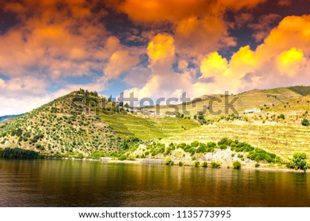 Travel in River Douro region in Portugal among vineyards and olive groves. Viticulture in the Portuguese villages at sunrise #1135773995