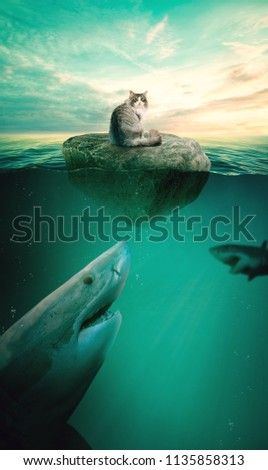 Fluffy cat on a rock in the sea. Cat on the rock. Cat in the sea #1135858313