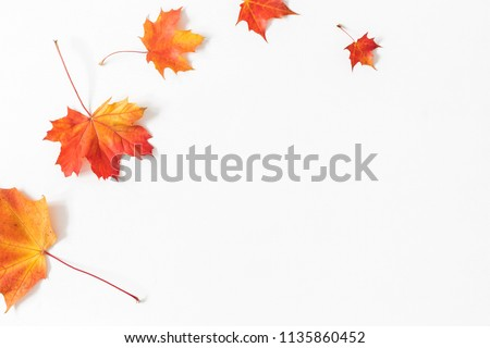 Autumn composition. Frame made of autumn maple leaves on white background. Flat lay, top view, copy space #1135860452