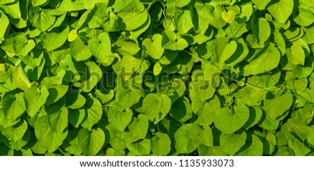 Green leaves background. #1135933073