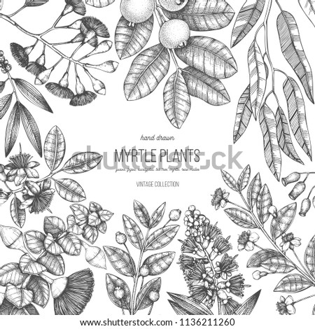 Botanical background with beautiful myrtle plants sketches. Hand drawn feijoa, Eucalyptus, tea tree, guava, myrtus drawings. Exotic trees design template with fruits, leaves, berry, seeds, flowers. #1136211260