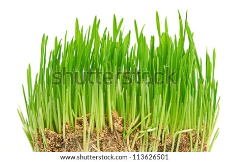 Green grass showing roots isolated on a white #113626501