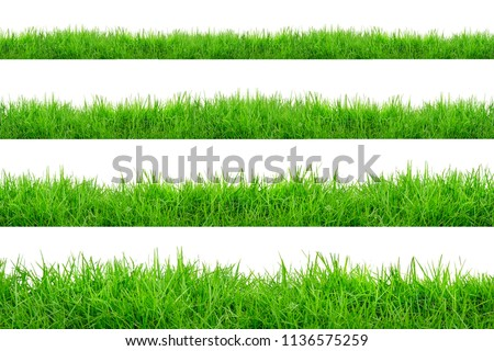 Green Grass Border isolated on white background.The collection of grass.(Manila Grass)The grass is native to Thailand is very popular in the front yard. #1136575259
