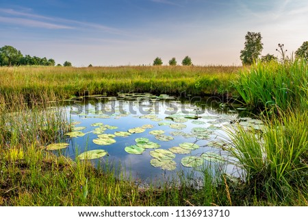 the Netherlands - Schraalland near De Meije Bodegraven. Pond with water lillies and rich grasslands. Polder  Oerlandschap Wetlands Biodiversity  Royalty-Free Stock Photo #1136913710