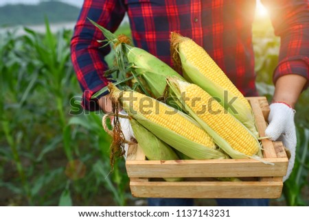 Corn harvest Corn farmer Corn harvest Growing corn Organic Farming, Organic Farming, Food and Vegetable Production, Organic Farming, Agricultural Land #1137143231
