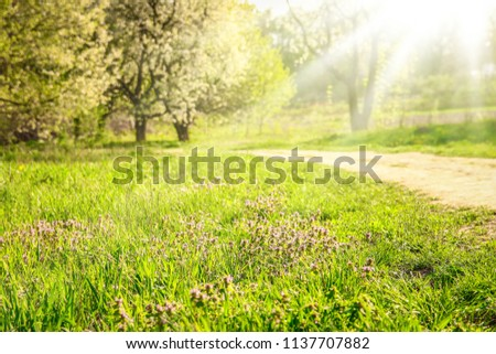 Park nature path in the meadow #1137707882