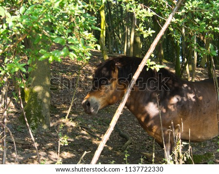 Pony in the shade of a tree #1137722330