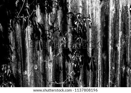 Abstract background. Monochrome texture. Image includes a effect the black and white tones. #1137808196
