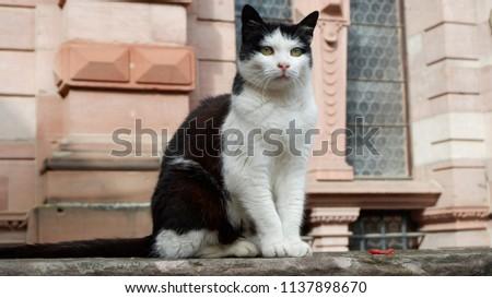 Cat in germany #1137898670