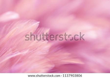 Blur Bird chickens feather texture for background Abstract, soft color of art design. #1137903806