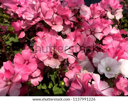 summer flowers..  in city park. flowers natural..  #1137991226