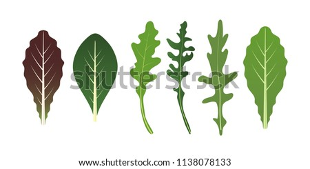 Mix of salad leaves. Arugula, spinach and lettuce leaf. Vector illustration set in flat style #1138078133