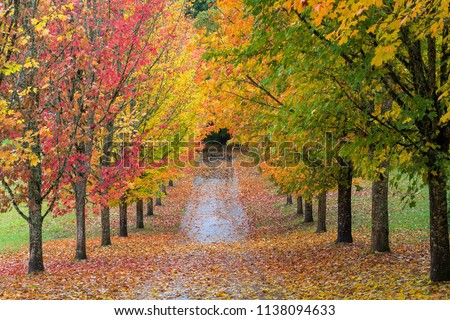 Fall Colors of Maple Tree Lined Path in Oregon #1138094633