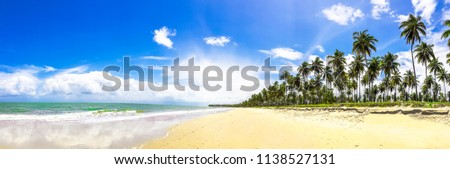 Panoramic tropical beach with palm trees in Maceió, Brazil. #1138527131