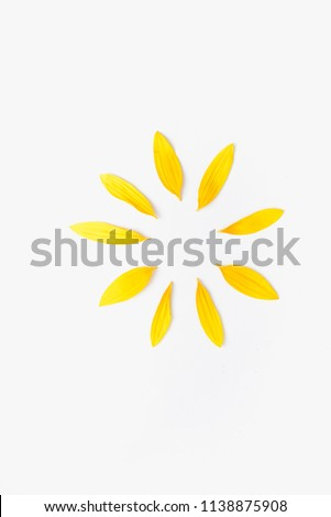 petals of sunflower, sunflower petals on white background, yellow petals #1138875908