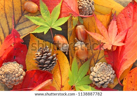 Colorful autumn fallen leaves and pinecone and acorn.