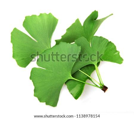 Ginkgo biloba leaf isolated on white background #1138978154