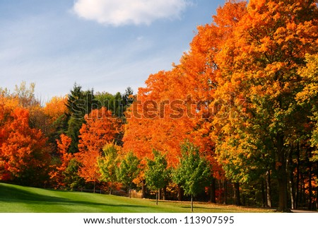 colorful autumn leaves in park #113907595