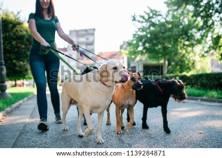 Dog walker enjoying with dogs while walking outdoors. #1139284871