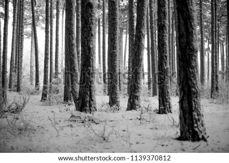 winter in forest  #1139370812