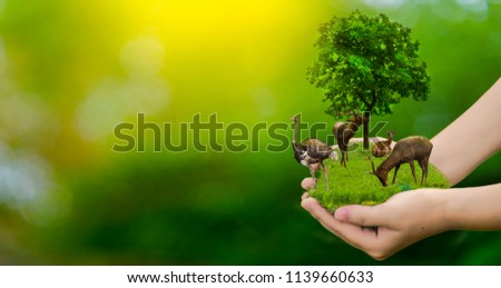 Wildlife conservation deer, ostrich, global warming, loneliness, ecology, human hands, can protect wildlife, trees in the hand, light yellow, sunlight. #1139660633