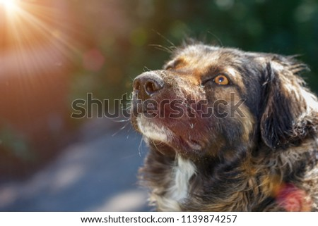muzzle dogs mongrels close-up natural background #1139874257