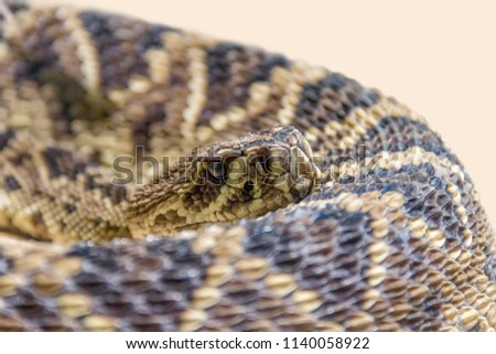 closeup shot of a Eastern diamondback rattlesnake #1140058922