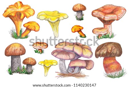 Watercolor autumn watercolo set of mushrooms. Isolated on white background. Orange-cap boletus, chanterelle mushroom,