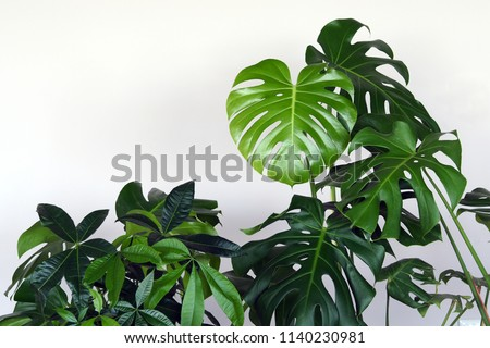 Large houseplants on the near white wall Royalty-Free Stock Photo #1140230981