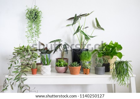 Group of houseplant  on table in room. Lifestyle home decoration #1140250127